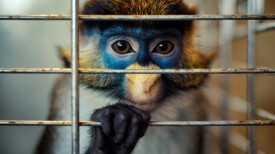 Animals___Monkeys_Monkey_behind_bars_041621_